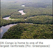 Congo rainforest